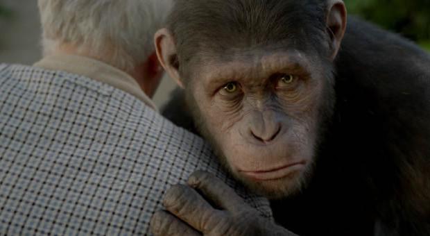 """, """"Planet der Affen – Prevolution"""" – Mein primatenhaftes Review"""